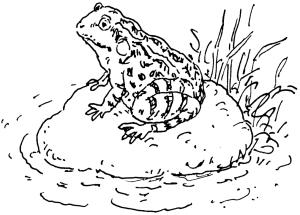 Frühling_Frosch