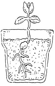Frühling_Pflanze