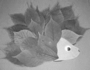 Herbst_Igel